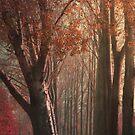 The beauty of Autumn  by Johanna26