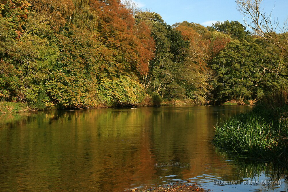 Autumn on the Don by Suzanne Forbes-Murray