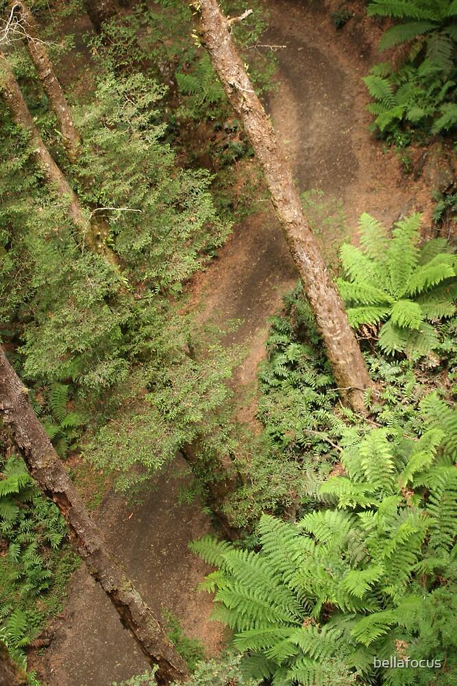 FOREST FLIGHT by bellafocus