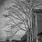 Lonely Tree - Pilgrim Psychiatric Center Abounded Buildings   West Brentwood, New York by © Sophie W. Smith