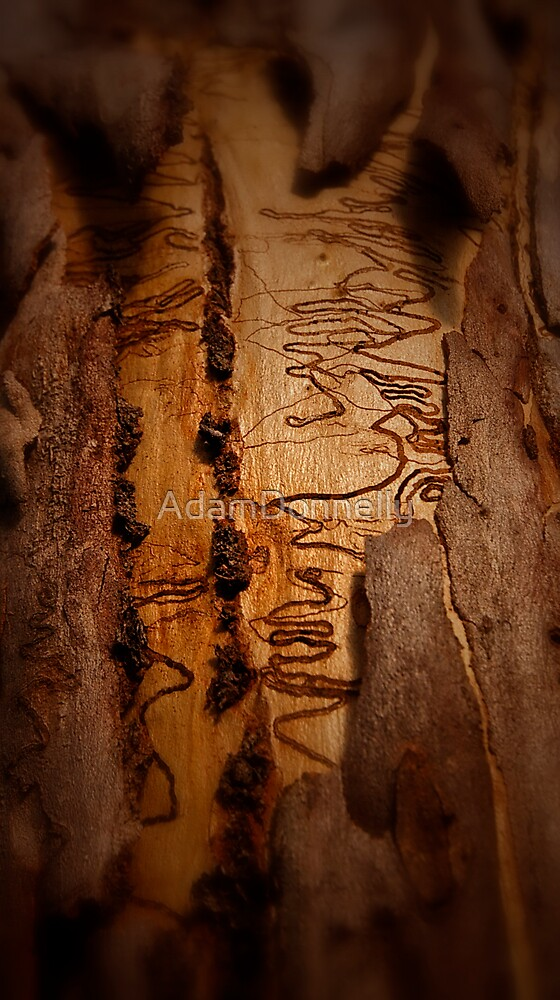 Scribbly Gum by AdamDonnelly