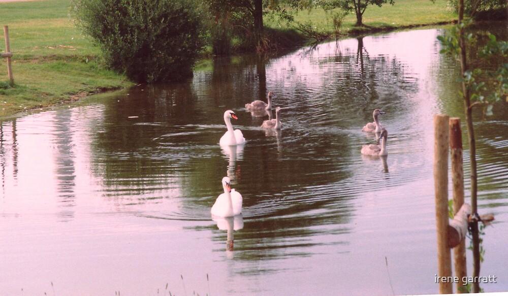 The swan family by irene garratt