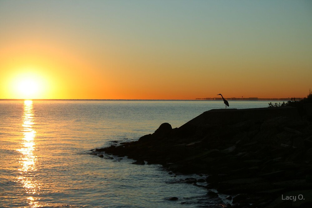 beaker morning by Lacy O.
