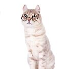 Smart Cat in Glasses by idapix