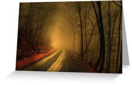 Foggy Wood by Robert Burns Miller