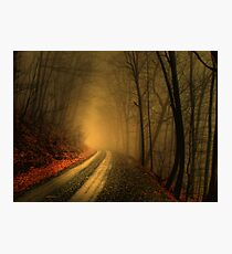 Foggy Wood Photographic Print