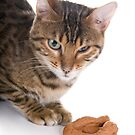 Cat and Poo by idapix