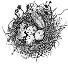 Nest Pencil Drawing by Rachelle Dyer