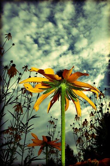 6.30 Sky, Part II by Tanya B. Schroeder
