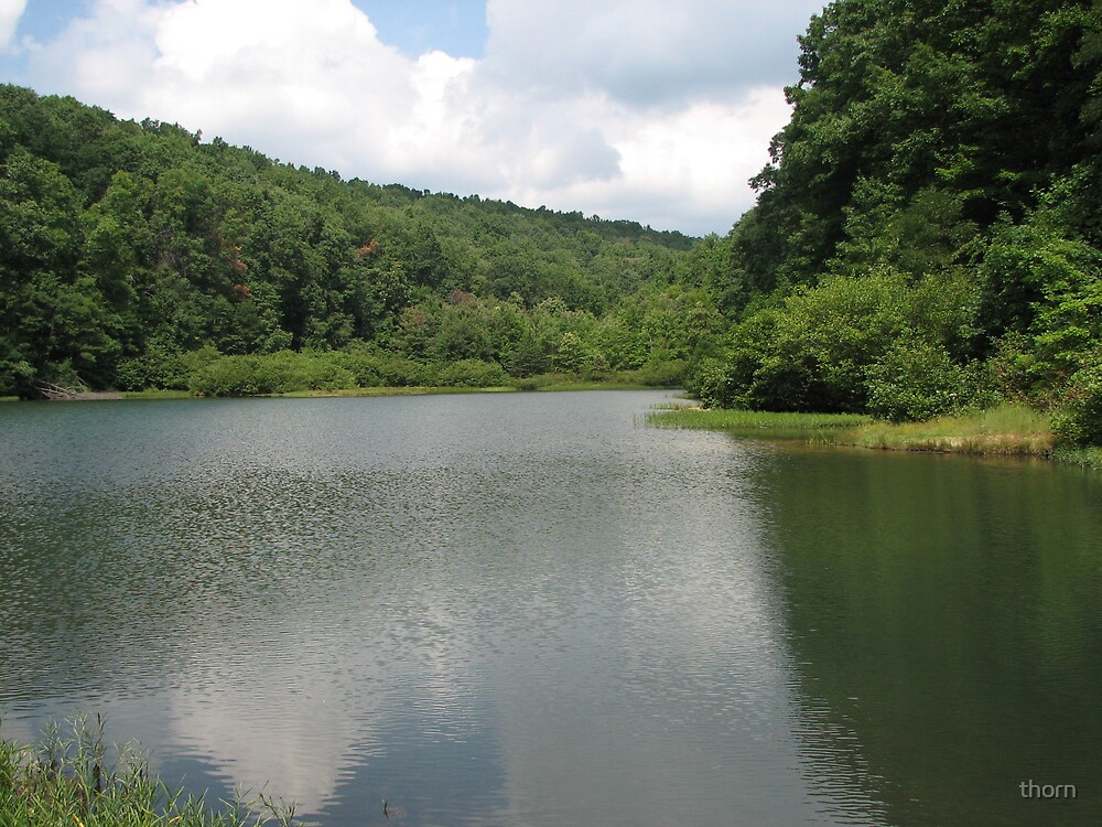 Trout Pond by thorn