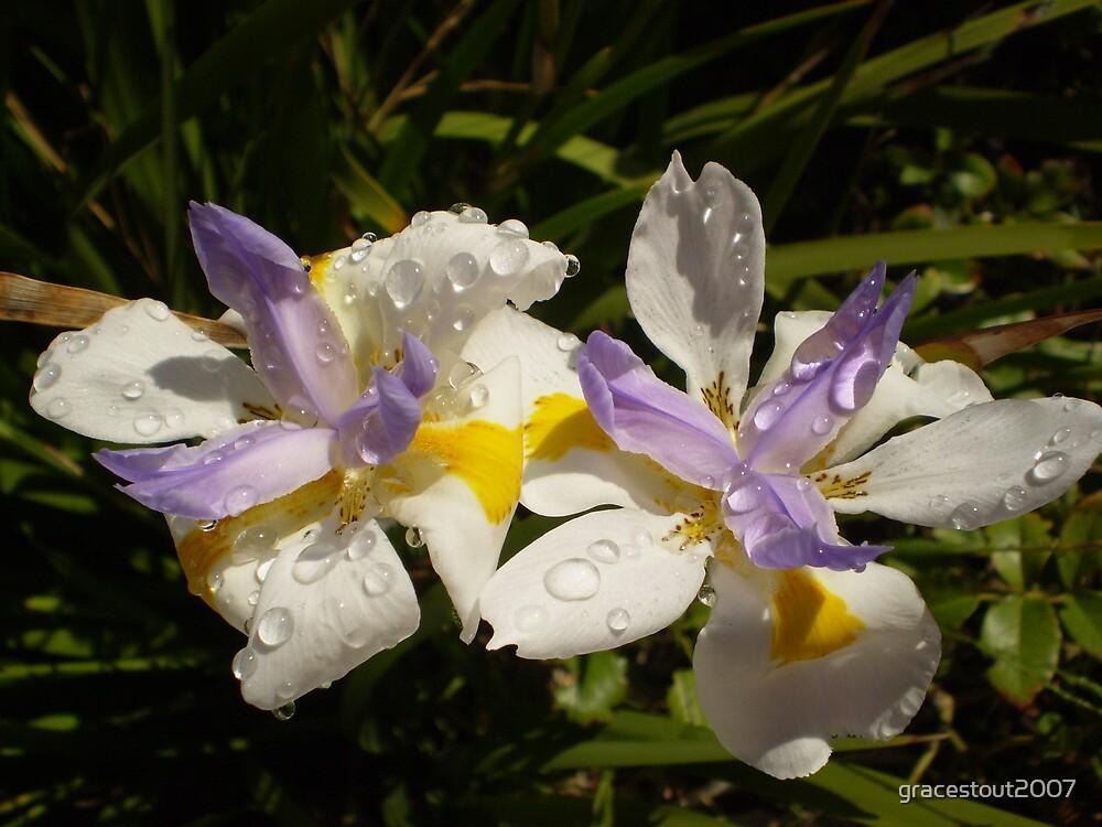 MORNING DEW ON IRISH FLOWERS by gracestout2007