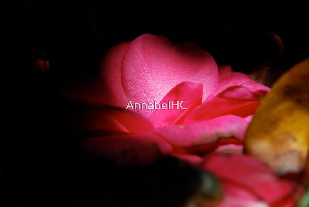 Nature Morte by AnnabelHC