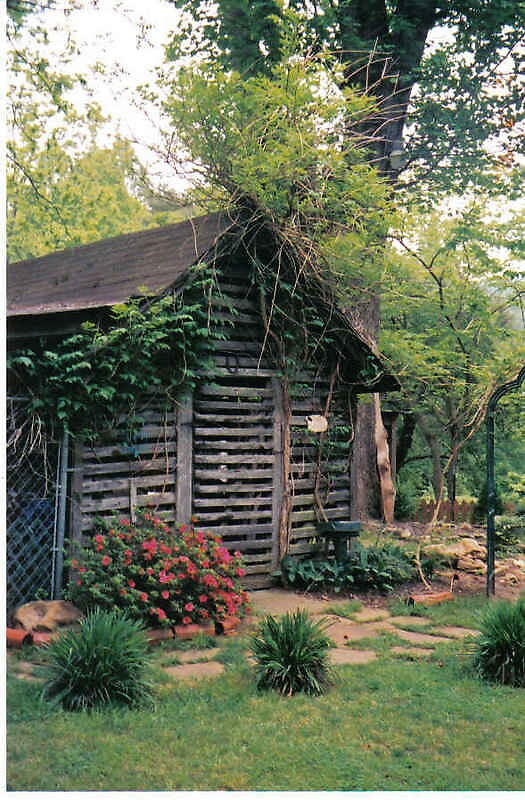 Ivy's Shed by Kimberly D. Allen