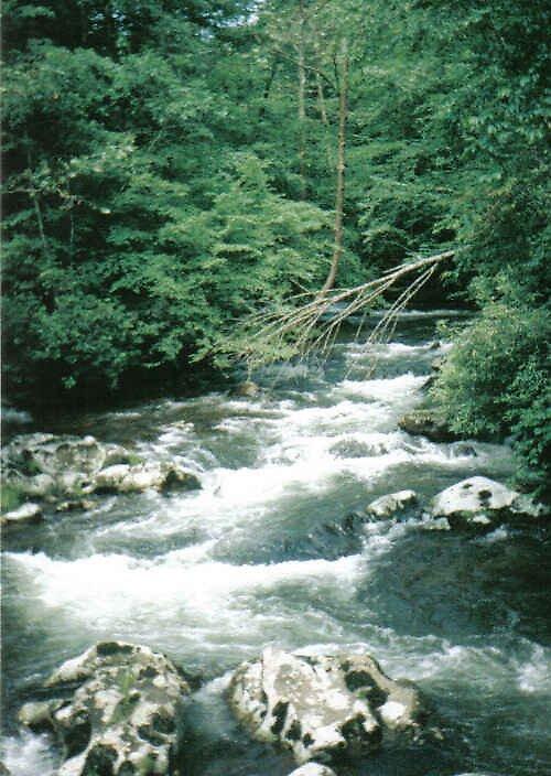 Hazel Creek by Kimberly D. Allen