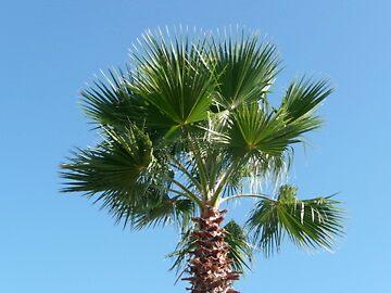Florida Palm by itsjustcharlie