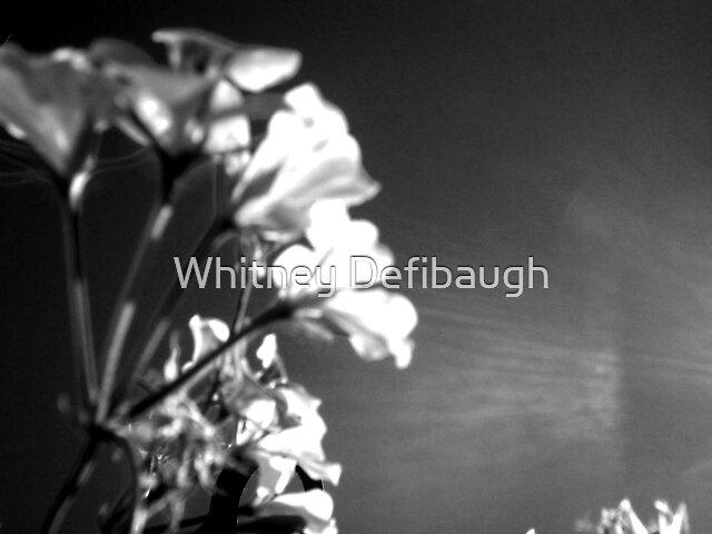 Flowering Light by Whitney Defibaugh