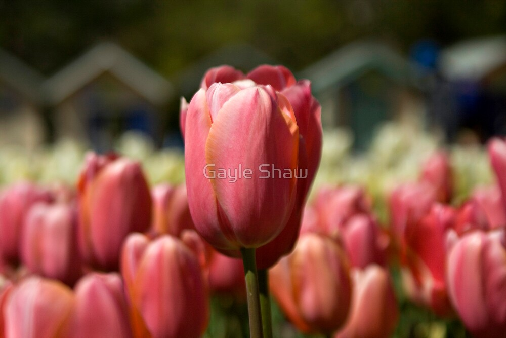 Stand out from the crowd by Gayle Shaw
