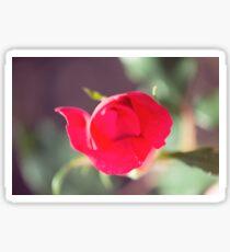 Romantic Red Rose Macro Sticker