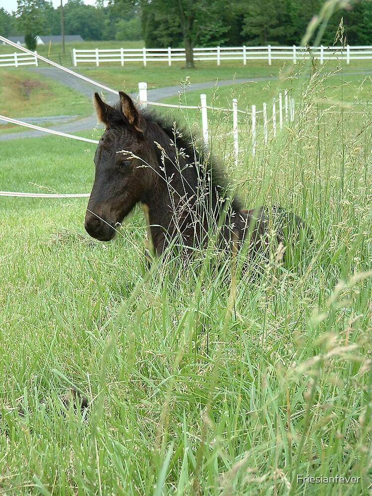 Grass Filly by Friesianfever