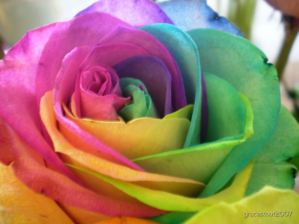 COLOURFUL ROSE by gracestout2007
