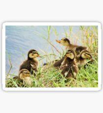 Ducklings Sticker