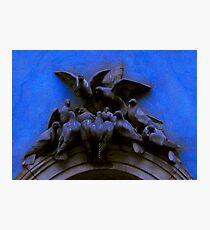 Pigeons Photographic Print
