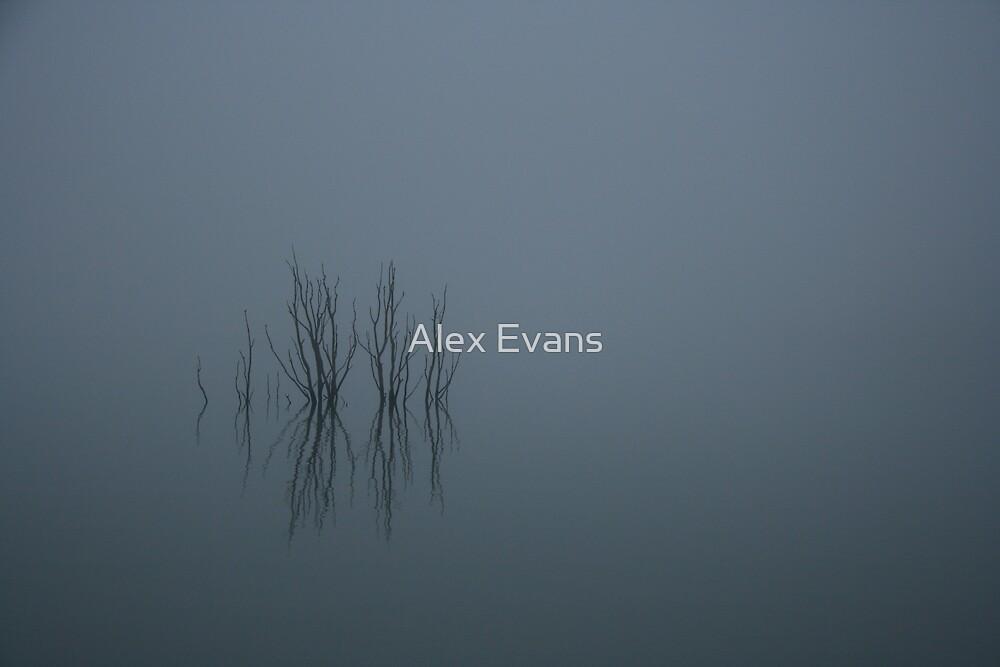 Forgotten Forest II by Alex Evans