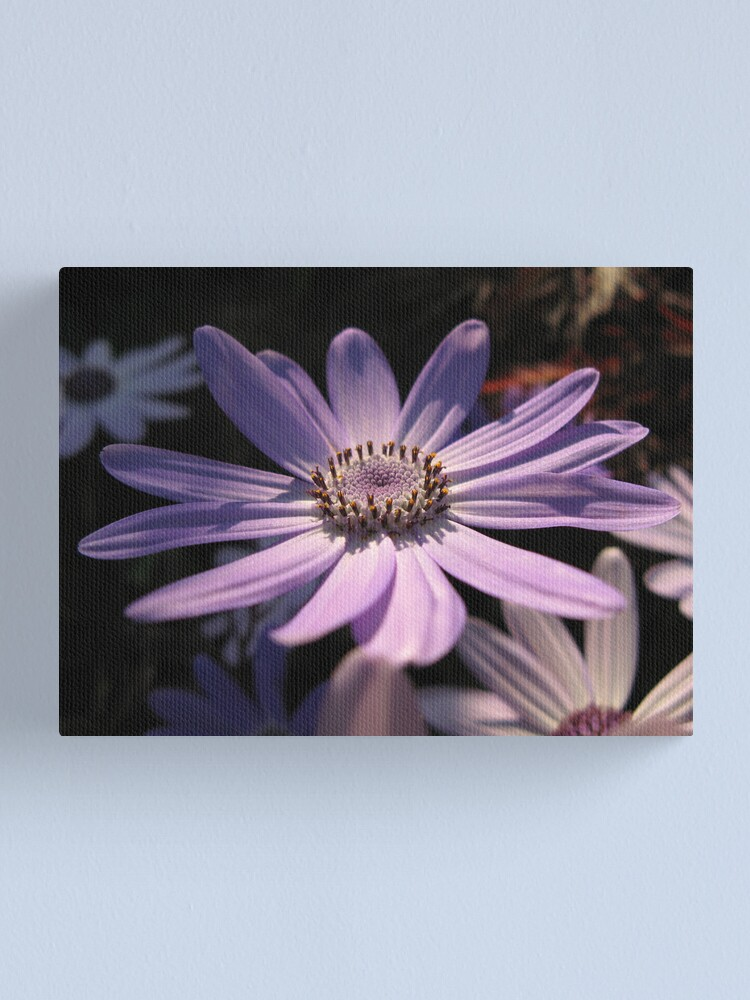 Alternate view of Senetti Sun Canvas Print
