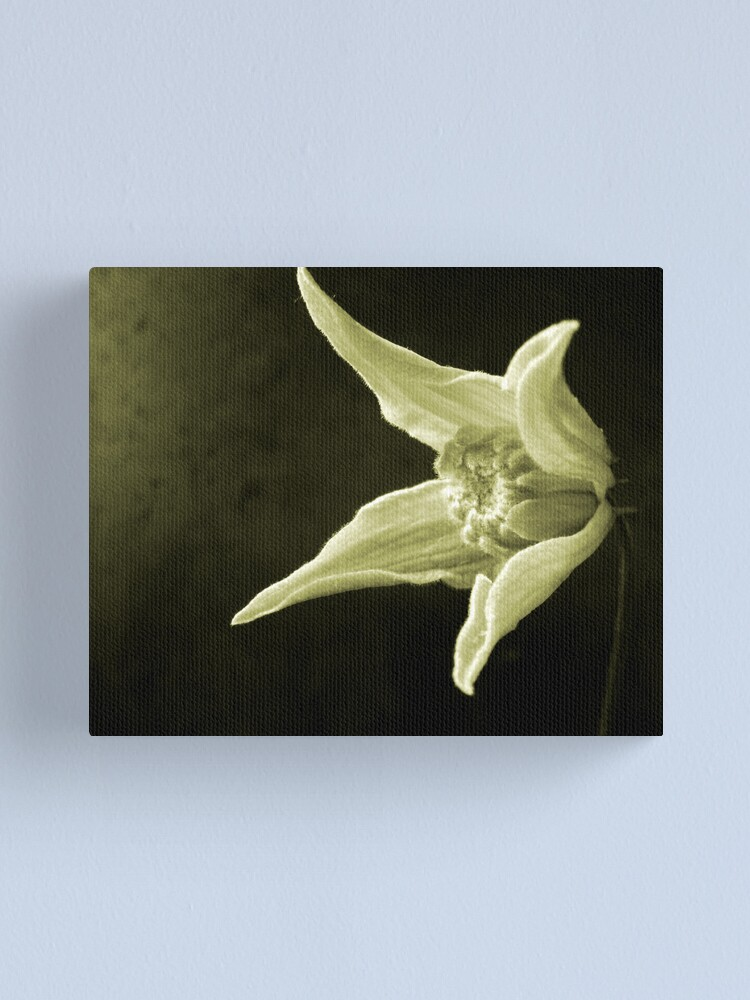 Alternate view of Clematis Study Canvas Print