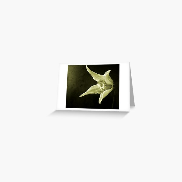 Clematis Study Greeting Card
