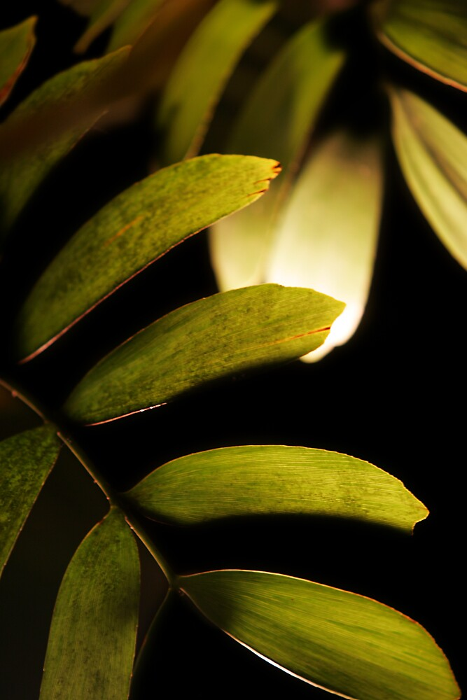Light and leaves by bobovoz