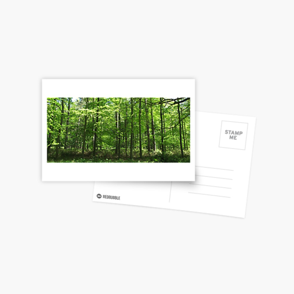 Forest Green Postcard