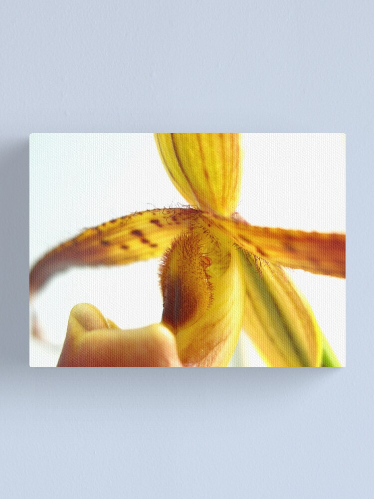 Alternate view of Orchid Study Canvas Print