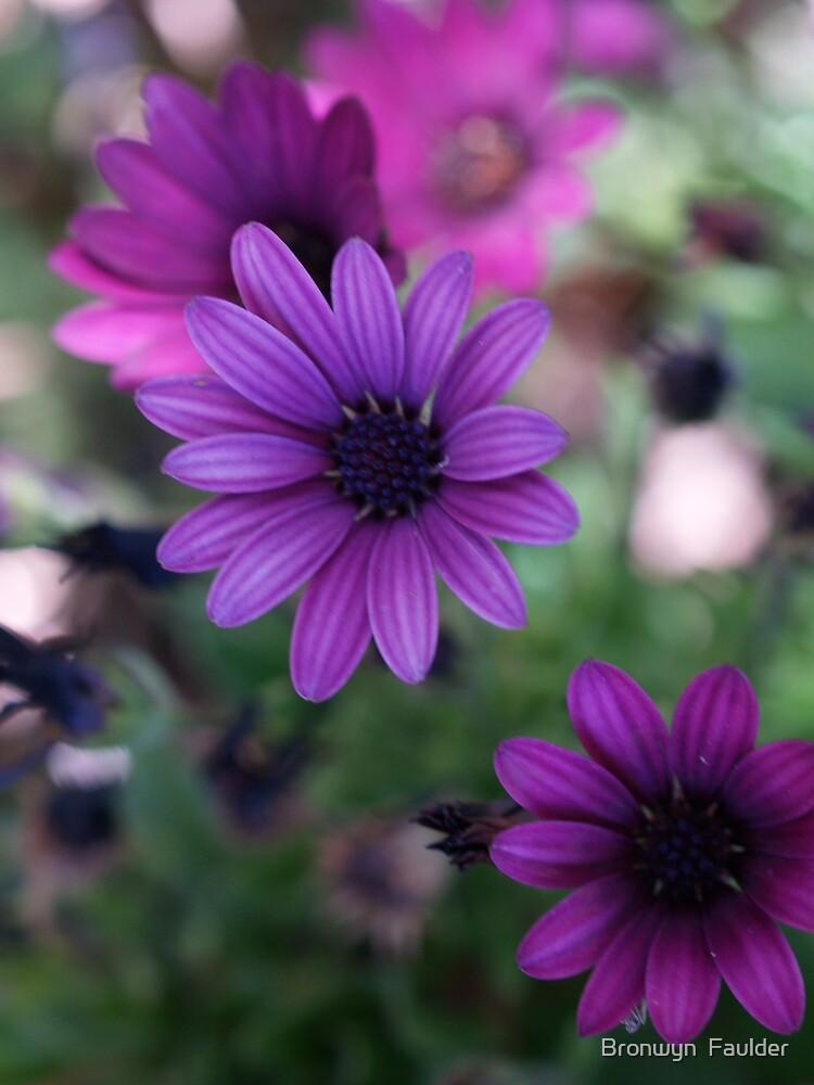 A Daisy or Two by Bronwyn  Faulder