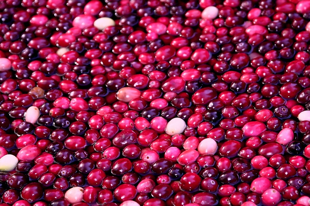 Discover cranberry, the wonderberry by Semmi