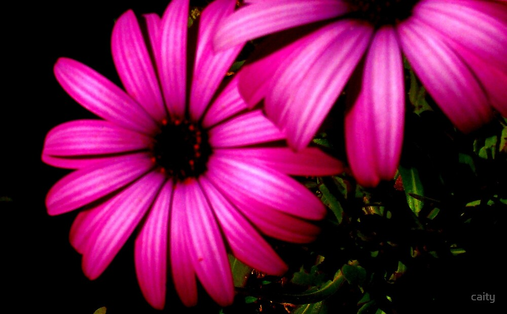 pink flower by caity