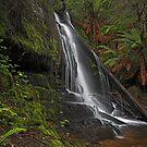 Lilydale Falls by Peter Daalder
