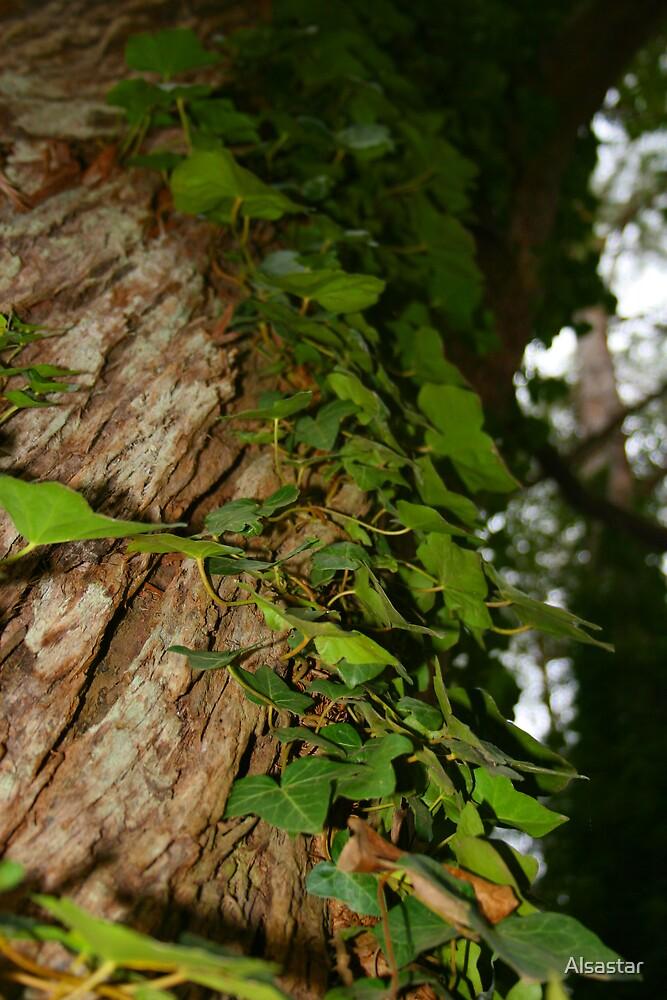 Climbing Vine by Alsastar