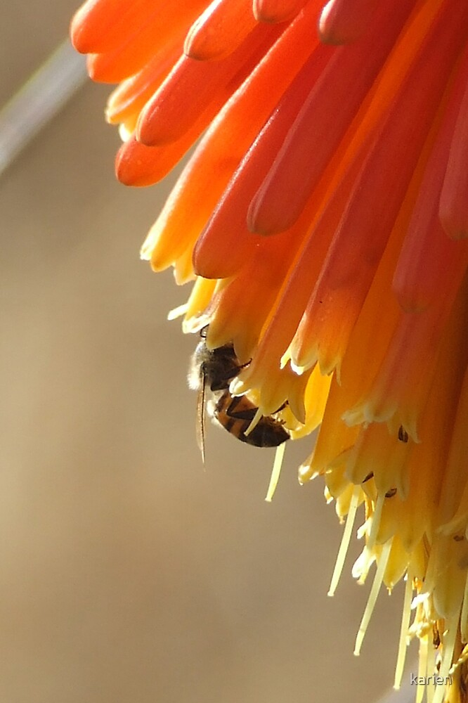 Bee by karien