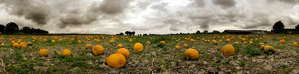 Pano in the Pumpkin Patch by Oneof42