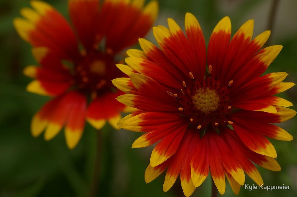 """Flowerful"" Colors by Kyle Kappmeier"