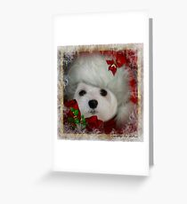 Snowdrop the Maltese on Christmas Eve Greeting Card