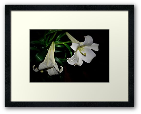 Two white lilies by ♥⊱ B. Randi Bailey