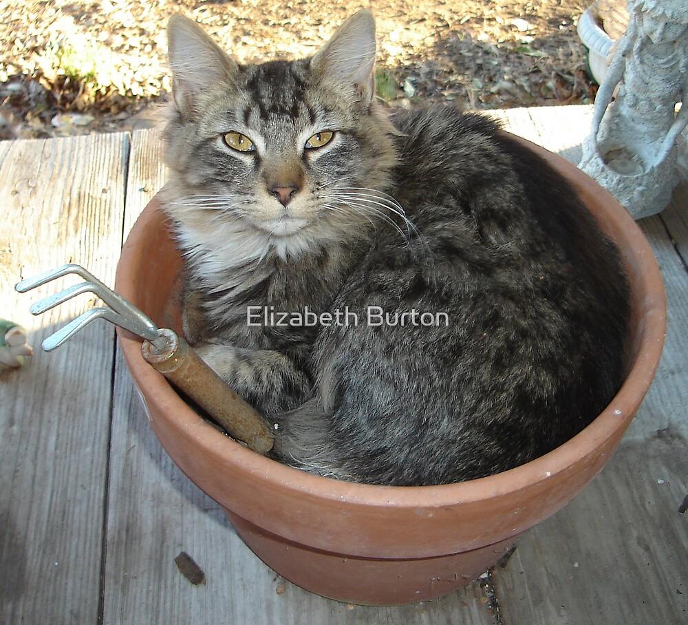 Buddy The Garden Cat by Elizabeth Burton