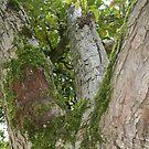 Mossy Tree by Paul Martinek