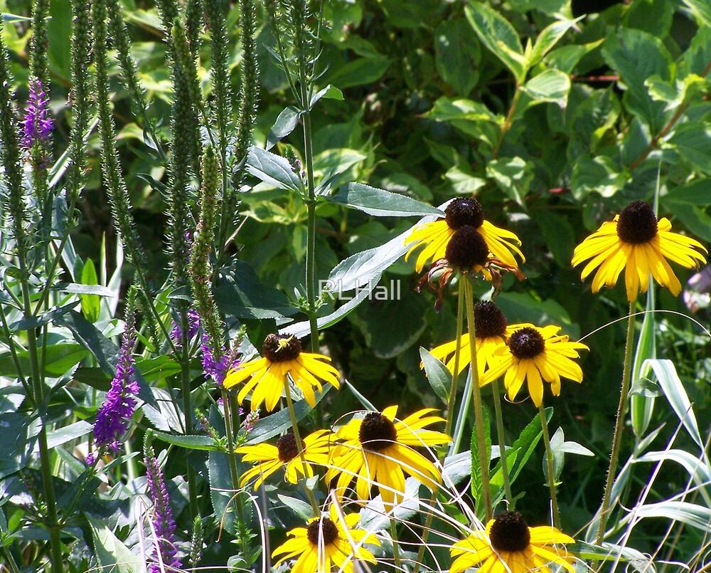 Wildflower Garden by RLHall