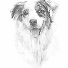 dappled sheep dog drawing by Mike Theuer
