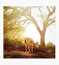Goat at the sunset meadow Photographic Print