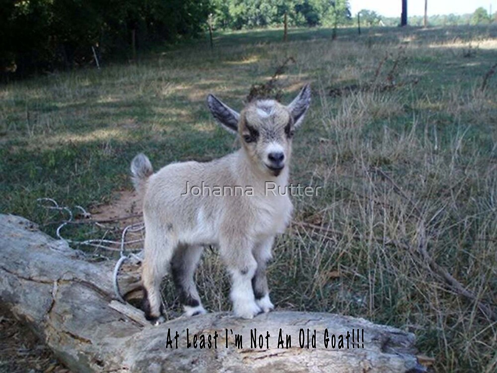 At least I'm not an old goat!!!  by Johanna  Rutter