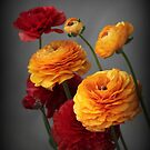 Ranunculus in Bloom by Jessica Jenney